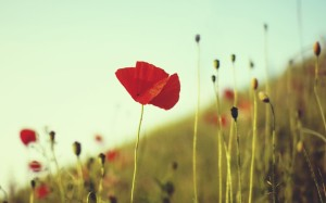 nature_snapshot_Poppy_dunel
